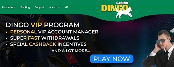Dingo VIP program