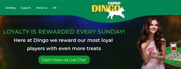 Dingo Loyalty Program