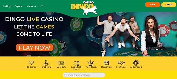 Dingo Live Dealer